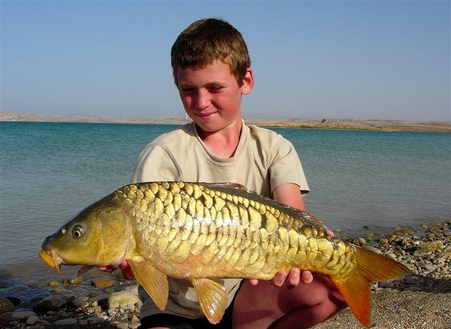 The one fishing toute la p che de la carpe for Carpe koi croissance