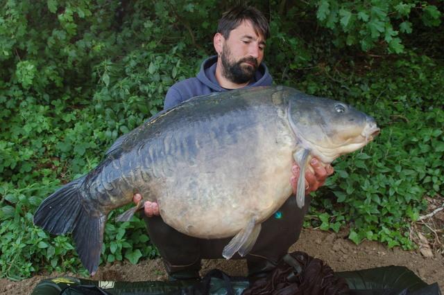 The one fishing toute la p che de la carpe for Acheter grosse carpe